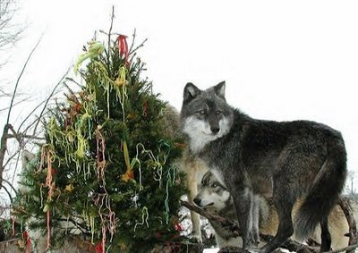merry_xmas_from_wolf_park